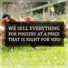 We Sell Everything Poultry
